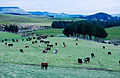 New Zealand - Landscape - 8668.jpg