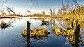 Nienwohlder Moor See Ufer Vordergrund 2015-03.jpg