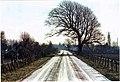 Nieuwdorp Lewedijk Linden Trees (De-)Formed By Prevalent West Winds.jpg