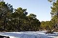 Nieve - panoramio (14).jpg