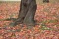 Nijojo 2008-11-21 (3107690147).jpg