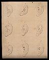 Nine ears. Drawing, c. 1793. Wellcome V0009264EL.jpg