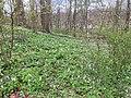 Noorderplantsoen Gasthuizen Stinzenflora 22 34 49 350000.jpeg