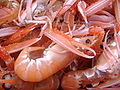 Norway Lobster Scotland.jpg
