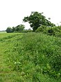 On the other side of the hedge - geograph.org.uk - 828904.jpg