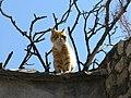 Orange cat (5750675610).jpg