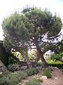 Orléans - jardin des plantes (28).jpg