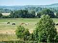 Osinskiy r-n, Permskiy kray, Russia - panoramio (9).jpg
