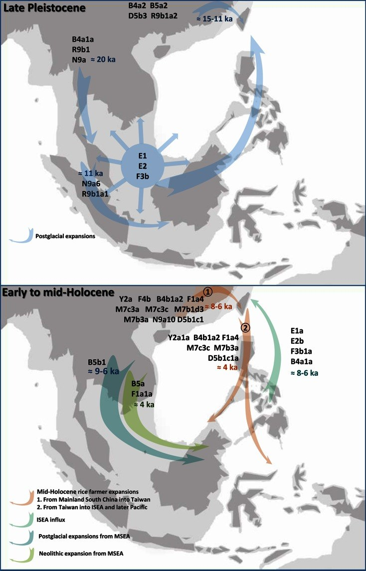 Outline of maternal lineages involved in the main human migrations in the region of Southeast Asia and Taiwan
