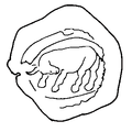 Outline of the Seal of ʿAmr Ibn Al-ʿĀṣ.png