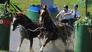 Combined driving - Horse pair crossing water obstacle