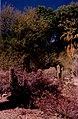 Palm Springs Desert Museum 7 March 1996.jpg