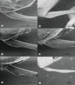 Parasite170127-fig5 ovipositor Pimplinae TEM.png