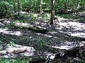 Parc-nature du Bois-de-l-ile-Bizard 17.jpg
