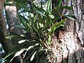 Parque La Llovizma 2003 042.jpg