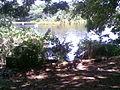 Parte del río caroni 02.jpg