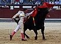 Pase de pecho de Antonio Ferrera.jpg