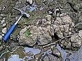 Pedogenic breccia (Conemaugh Group, Upper Pennsylvanian; creek cut on the western side of Caldwell, Ohio, USA) 22.jpg