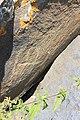 Petroglyphs from Ukhtasar 15092019 (291).jpg