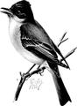 Phoebe-Birdcraft-0292-42.png