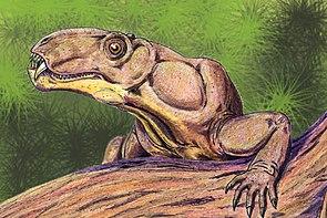 Phtinosuchus, ein Biarmosuchier aus dem Oberperm