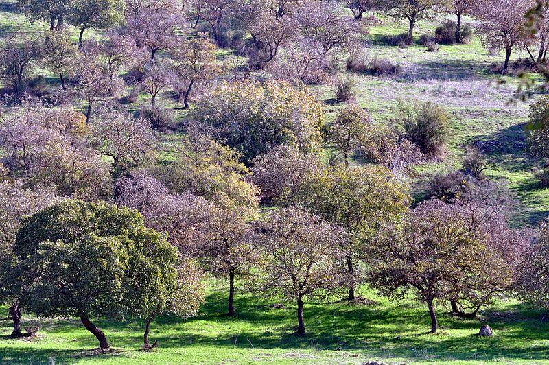 יער בית קשת
