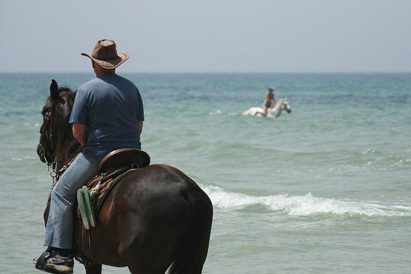 סוסים בחוף געש