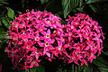 Pink-flower-bundles - Virginia - ForestWander.jpg