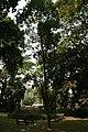 Plantes usuelles 02.jpg