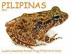 Platymantis biak 2011 stamp of the Philippines 2.jpg