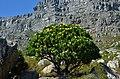Pod Stolovou horou, Kapské město - Jihoafrická republika - panoramio (3).jpg