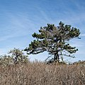 Point Lobos State Natural Reserve 1 18 19 (46825346371).jpg
