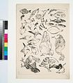 Poissons, oiseaux, poussin (NYPL b14506646-1149360).jpg