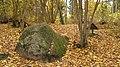 Pokaiņu mežs Лес Покайню 2015 - panoramio (3).jpg