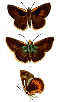 PolaAtaphus 746 1.jpg