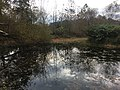 Pond in Brumley Nature Preserve.jpg