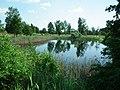 Pond in Nowy Folwark gmina Września.jpg