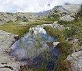 Pond on mountain.jpg