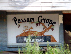 Possum Grape.png