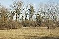 Prairies humides.jpg