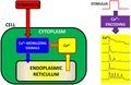 Principle of calcium encoding.tif
