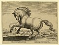 Print, A Danish horse from the fourth set of Equile Joannis Austriaci, ca. 1575 (CH 18099445).jpg