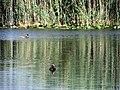 Pro Natura Zentrum Champ-Pittet 04.jpg