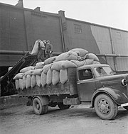 Producing Your Sugar- the Growing and Processing of Sugar Beet, Britain, 1942 D10940.jpg