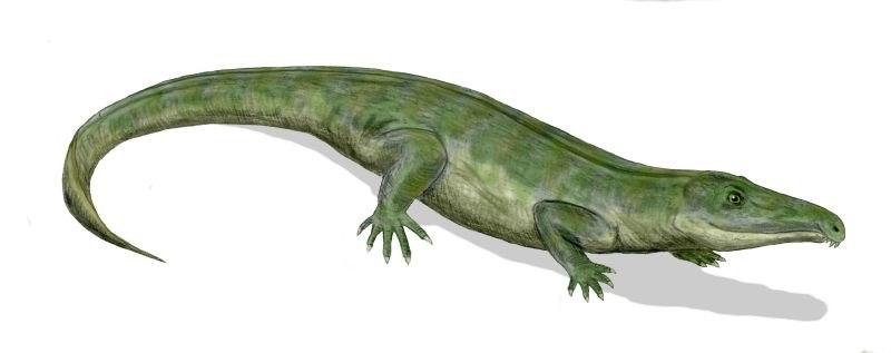 Proterosuchus BW