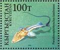 Pseudoscaphirhynchus kaufmanni.png