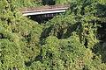 Pueraria montana var. lobata (22396627501).jpg