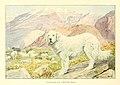 Pyrenean sheep-dog, mastiff (cropped).jpg