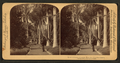 Queen's Hospital grounds, Honolulu, Hawaiian Islands, by Strohmeyer & Wyman.png