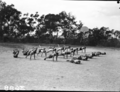 Queensland State Archives 1644 Teachers Training College mens physical education Brisbane April 1951.png